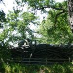 Thumbnail of Educational Hawk Nest Sculpture