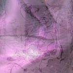 Thumbnail of Lavender Struggle